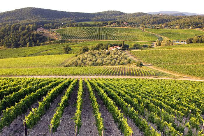 LEARN ABOUT ITALIAN WINES AND THE BEST TUSCAN ONES, MY PRIVATE WINE TOURS