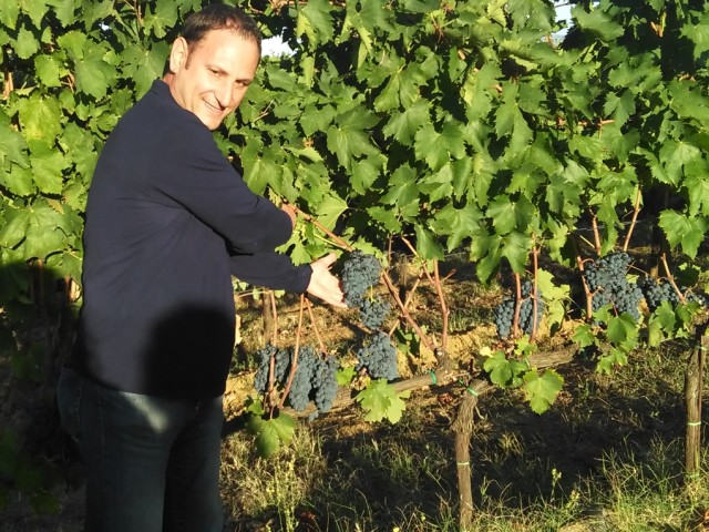 GRAPE HARVEST TIME IN TUSCANY, IT WILL BE A GREAT VINTAGE…
