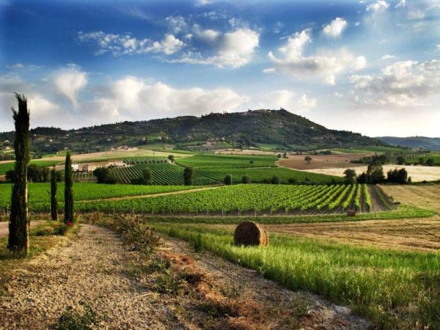 MY FAVOURITE WINE TOUR IN TUSCANY IS … BRUNELLO IN MONTALCINO