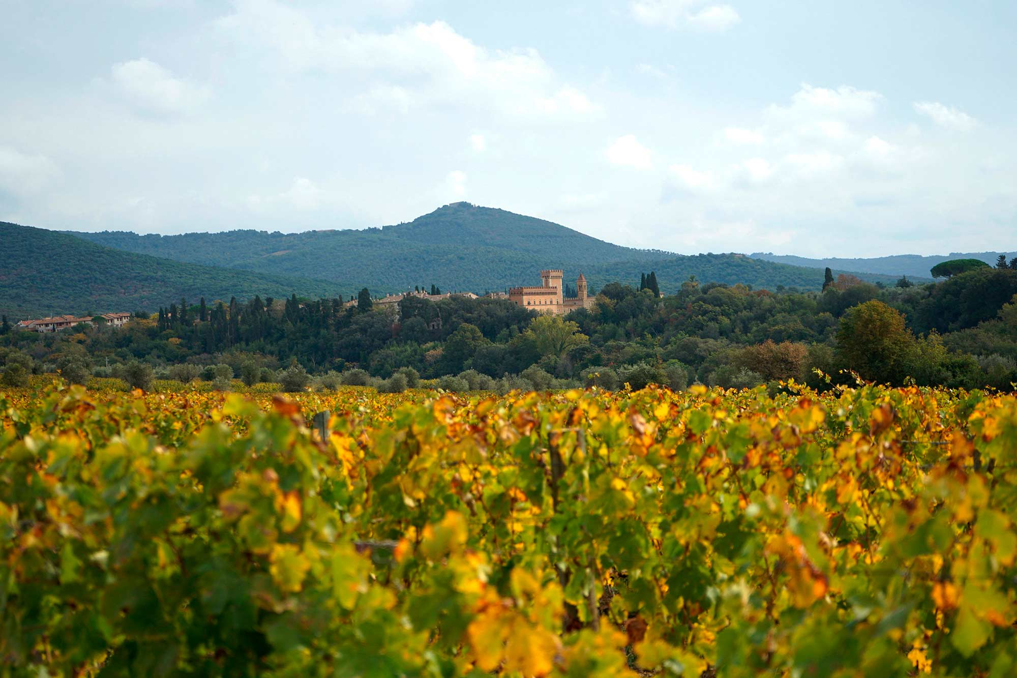 Bolgheri in autumn
