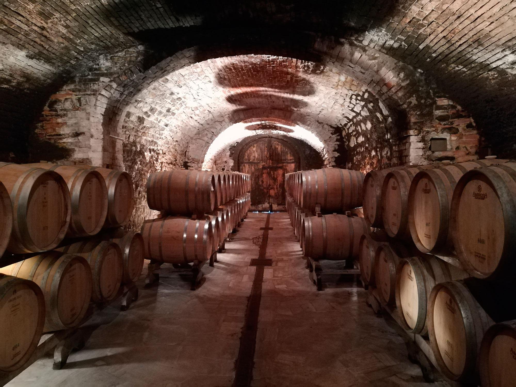 Chianti barrels cellar