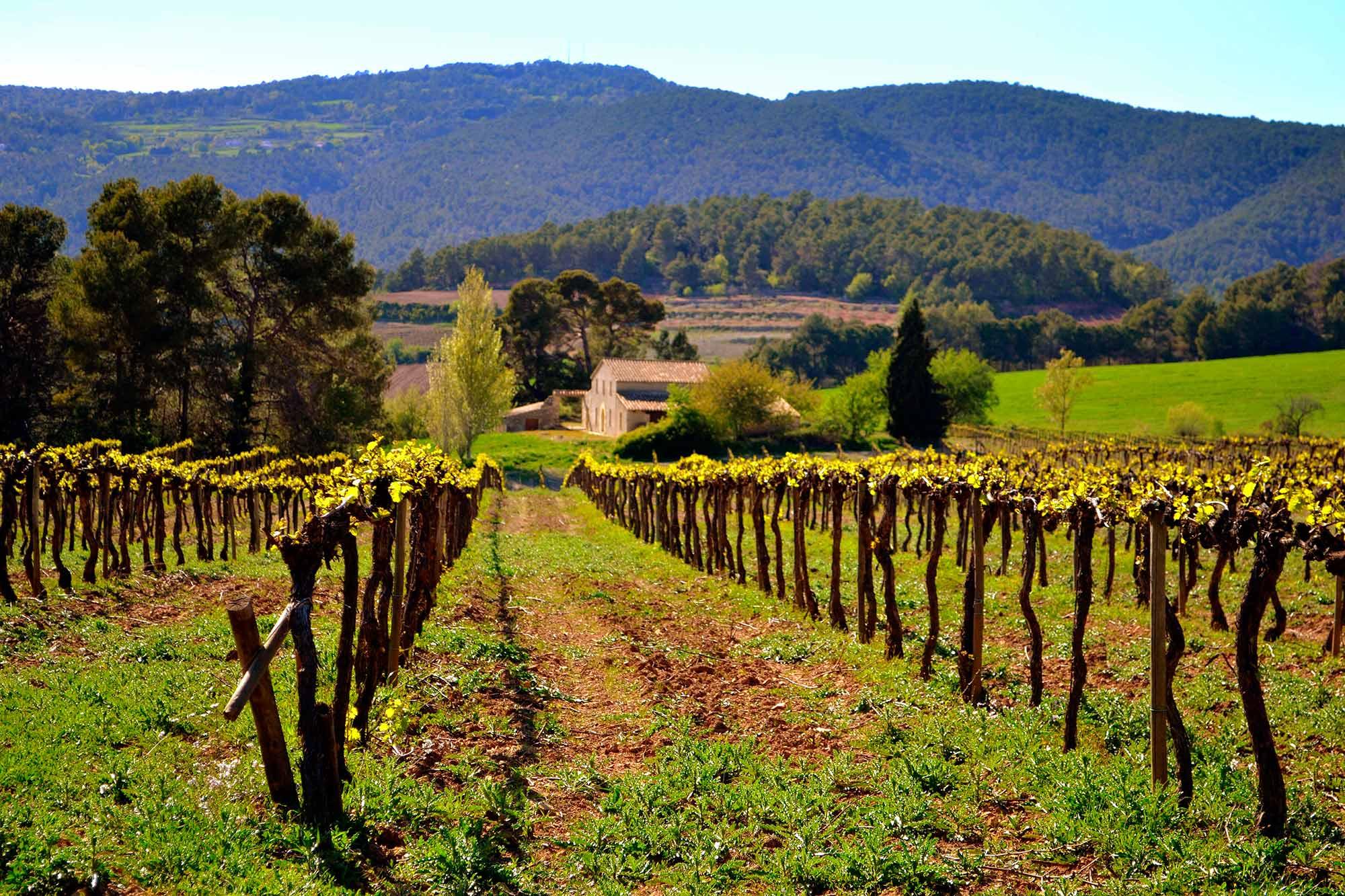Torgiano wineyards
